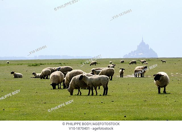 France, Normandy, Manche, bay of Mont-Saint-Michel on the world heritage list of UNESCO, he Mont-Saint-Michel and the salt meadow sheeps