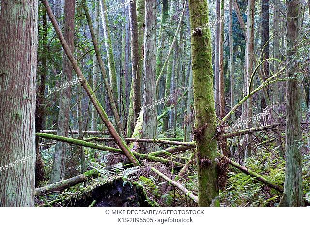 The forces of nature devastate a section of the Hansville Canopy Trail in Western Washington on the Kitsap Peninsula