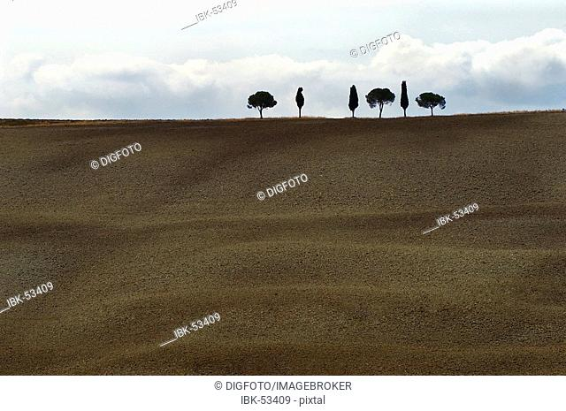 Cypresses and pines on a ridge, Val d'Orcia, Tuscany, Italy