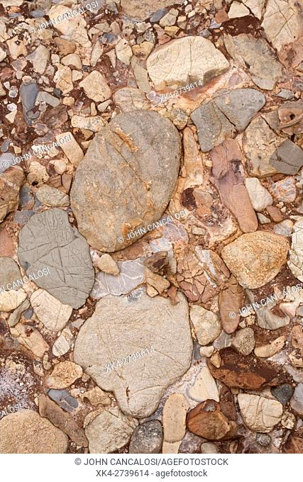 Leesburg Limestone Conglomerate closeup showing clasts , Frederick county Maryland, Formed in a Triassic half grabben created when the Africa plate split apart...