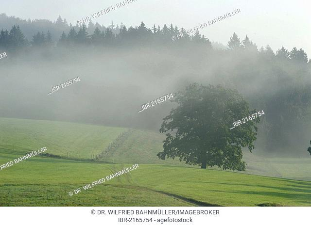 Morning mist at Groeben, near Grossweil, Loisach Valley, Upper Bavaria, Bavaria, Germany, Europe