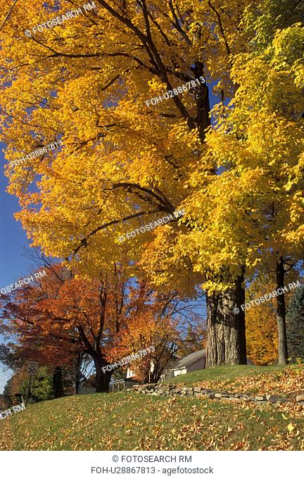 fall, Vermont, Colorful foliage in a neighborhood in Richmond in Chittenden County in the state of Vermont