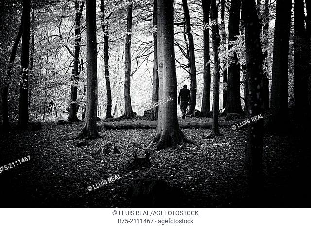 Unrecognizable man walking among the trees of a forest in Yorkshire Dales, England, UK, Europe