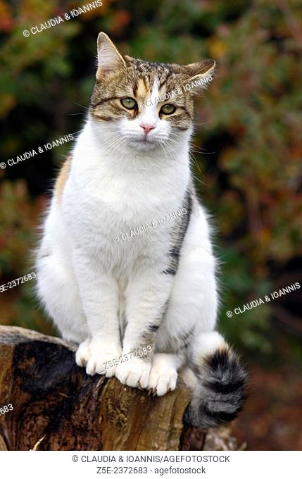 Portrait of a domestic cat sitting on a tree stub and looking at camera