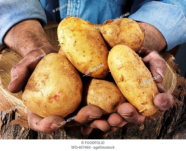 Man holding potatoes in both hands over a tree trunk