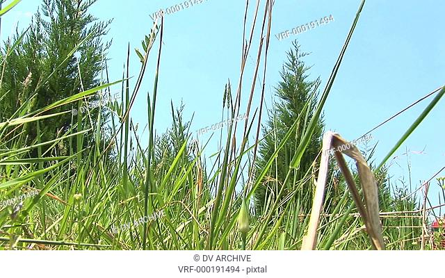 A worms-eye view of a grassy field as a red mower passes by