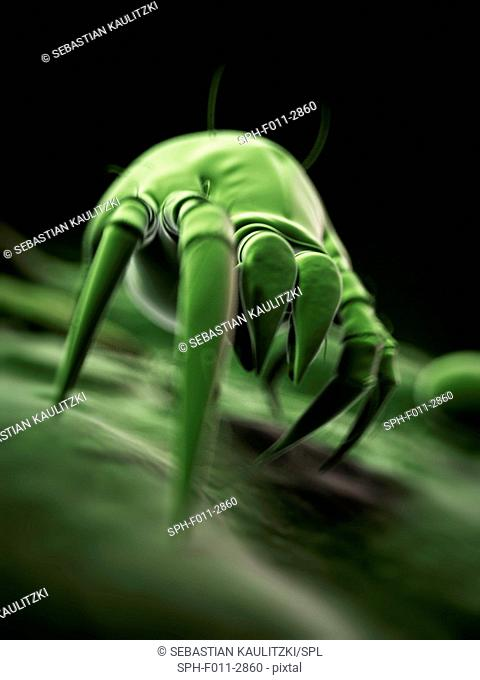 Dust mite, computer illustration