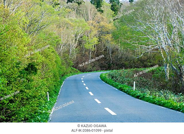 Road Passing Through Beech Forest