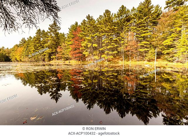 Autumn leaves reflected in wetlands in Bon Echo Provincial Park, Ontario, Canada