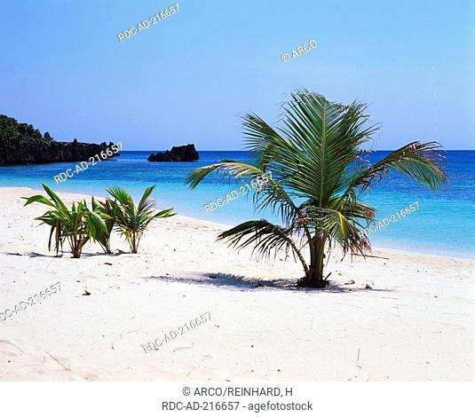 Palms at tropical beach, Honduras, caribbean
