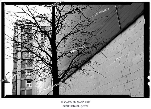 Leafless tree with urban background in black and white with frame