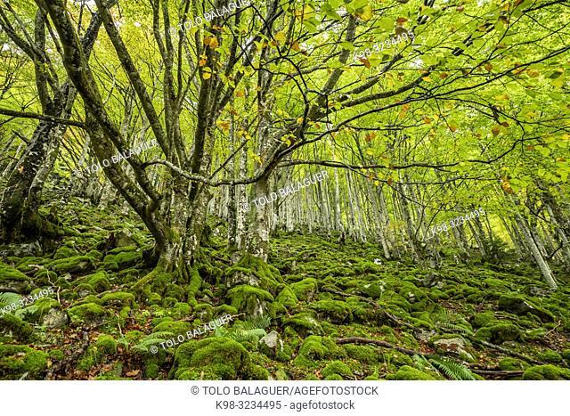 bosque de Bordes, valle de Valier -Riberot-, Parque Natural Regional de los Pirineos de Ariège, cordillera de los Pirineos, Francia