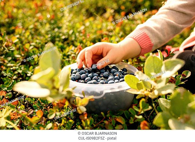 Young girl taking blueberry from bowl, close-up