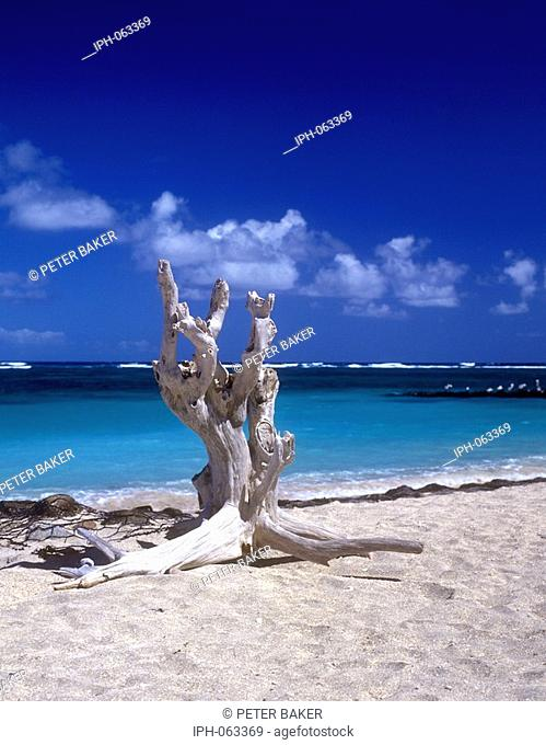 Weathered driftwood on a Nevis beach