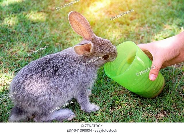 Kid hand is feeding the rabbit