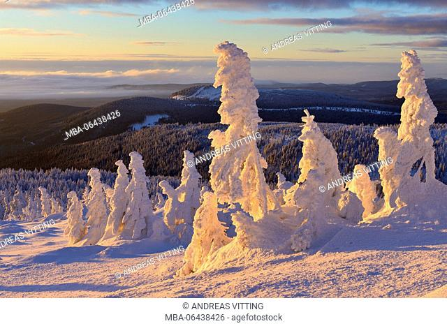 Germany, Saxony-Anhalt, Harz National Park, view from the lump over woods in winter, deeply snow-covered spruces, morning light