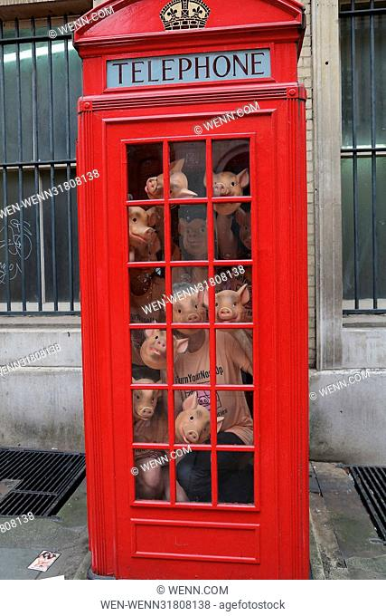 Marchioness of Worcester Tracy Worcester joins campaigners by squeezing into telephone boxes in a new stunt designed to replicate the conditions factory farm...