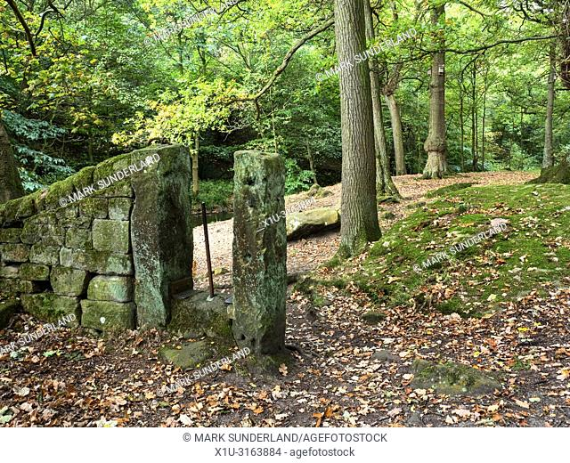 Early autumn woodland at Shipley Glen near Baildon West Yorkshire England