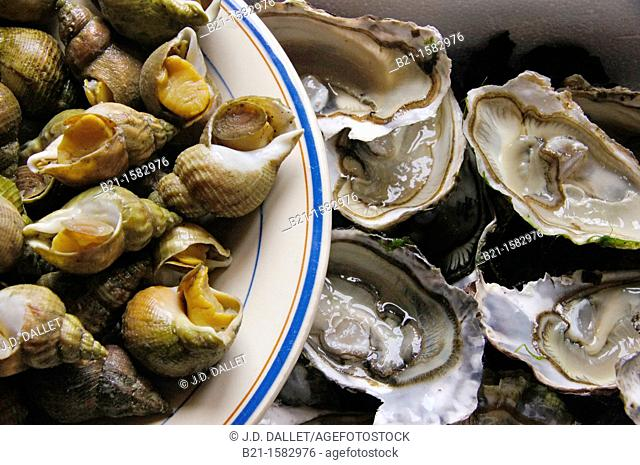 Food: 'bulot' shellfish and oysters from Arcachon, Gironde, Aquitaine, France