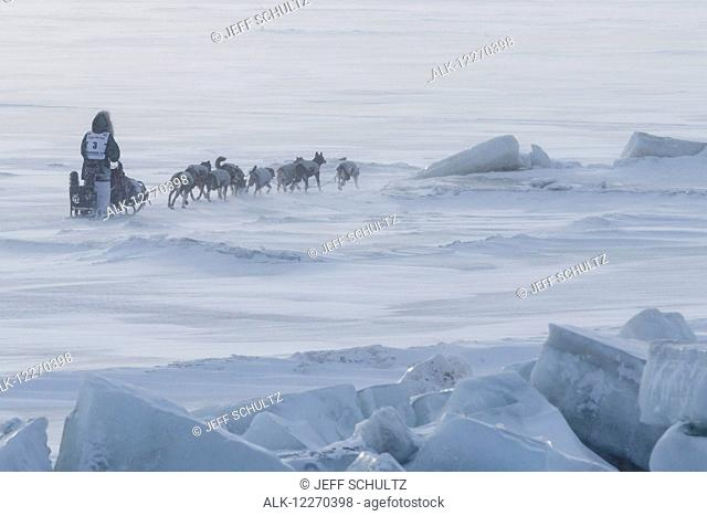 Paige Drobny runs on the Bering Sea close to Nome during the 2014 Iditarod Sled Dog Race