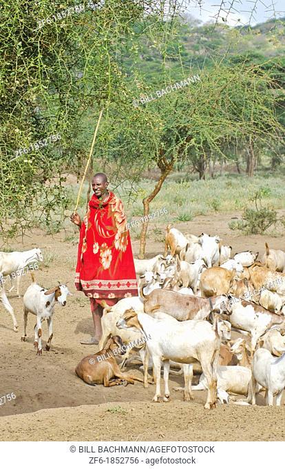 Arusha Tanzania Africa safari Masai men herder of goats leading flock to home village Maasai, red, color, work, farm, farming, grazing 3