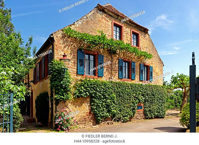 Europe, Germany, Rhineland-Palatinate, Neustadt an der Weinstrasse, wine route, Neustadt, Haardt, Mandelring, K 5, winegrower's house, rose tree, vine