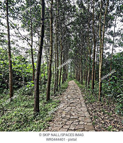 Tree Lined Stone Walkway