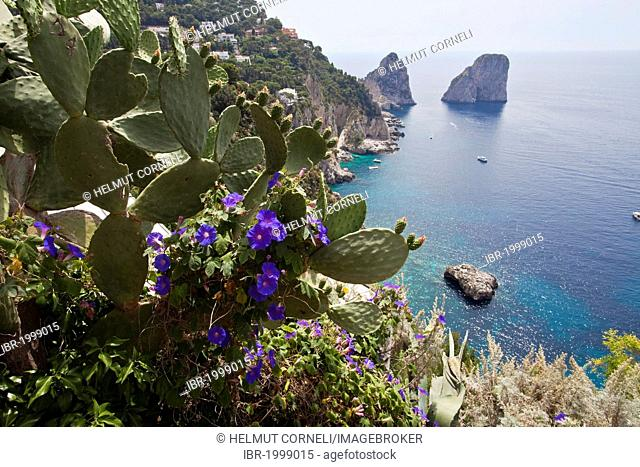 View from the Gardens of Augustus, Giardini di Augusto, view of the Faraglioni rocks, southern coast, Capri, Gulf of Naples, Campania region, Italy, Europe