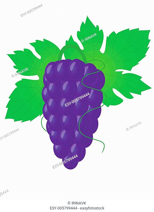 Big grape