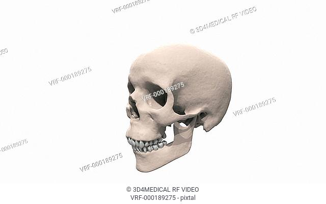 A zoom in on the skull which is rotating fully in a clockwise motion