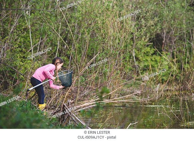 Girl retrieving frog from fishing net at pond