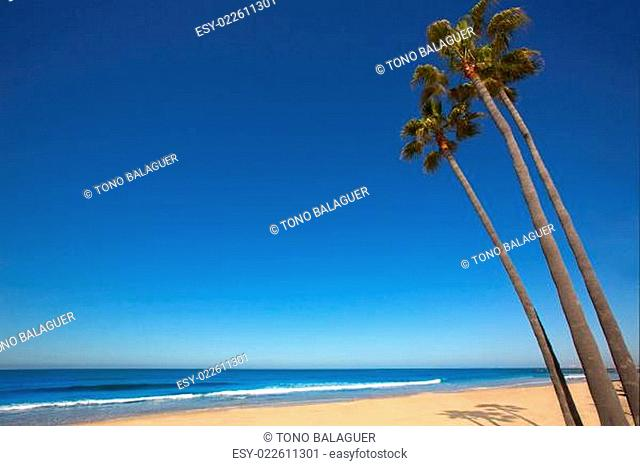 Newport beach California palm trees on shore