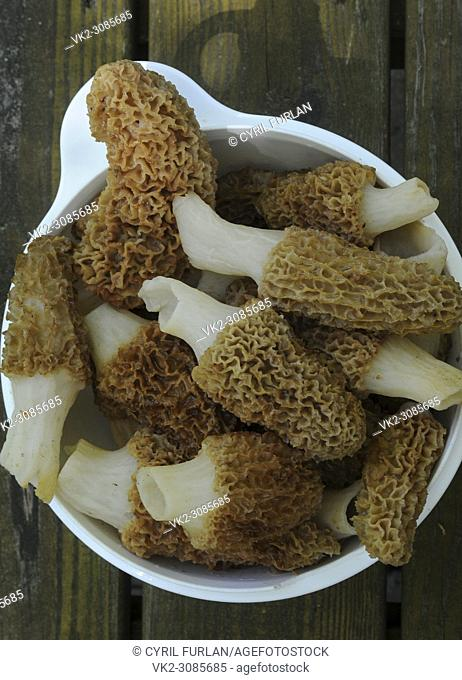 Freshly picked and washed morel mushrooms in a bowl
