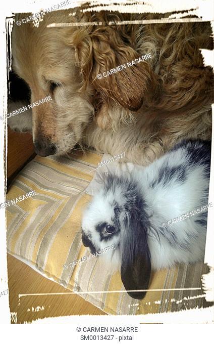 Dog and rabbit sharing a mattress
