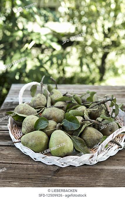 Pears on a wicker tray