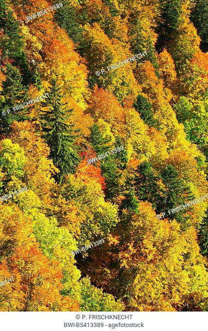 mixed forest in autumn, Switzerland, Neuenburg, Creux du Van