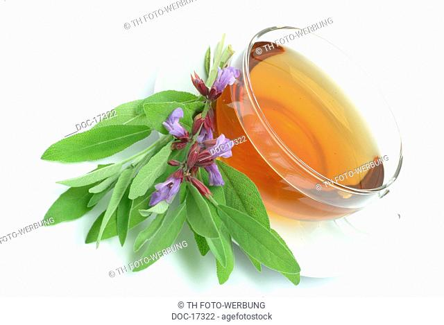 medicinal plant - medicinal tea - Salvia domestica - herb - Salvia officinalis