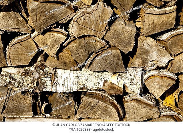 Birch wood, Castro Laboreiro, Peneda Geres National Park, Melgaco, Minho, Portugal