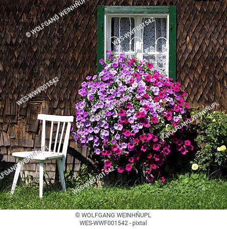 Austria, Land Salzburg, Flachgau, Berndorf, Flowers on window with empty chair