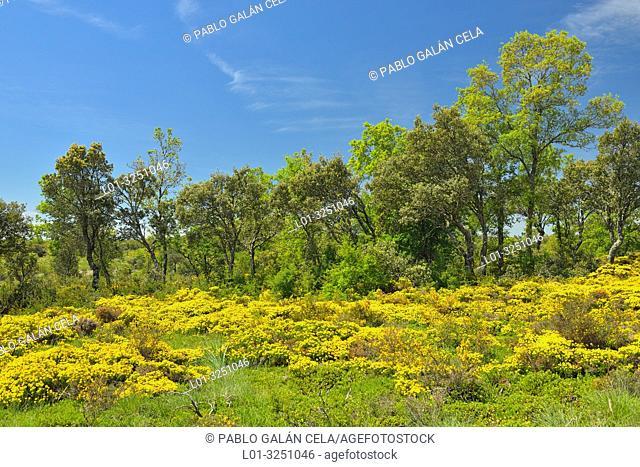 Spring in Páramo de Masa, Burgos Province, Castile-Leon, Spain