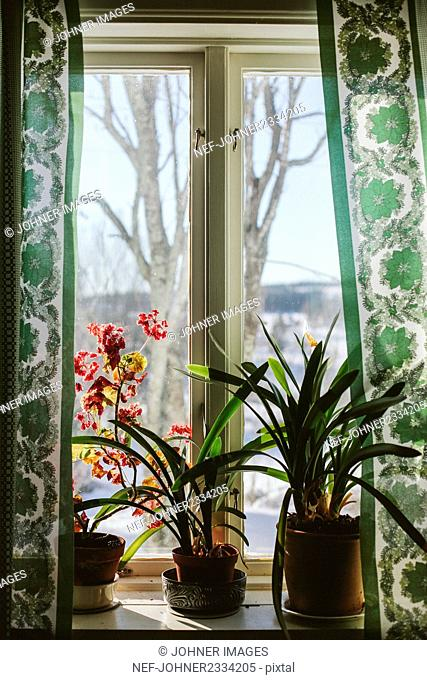 Plants in pots on window sill