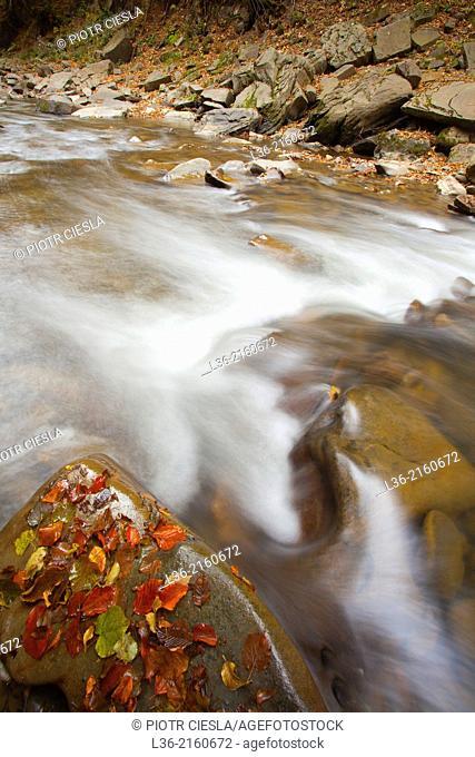 Sine Wiry Reserve. Bieszczady Mountains. Poland. Autumn