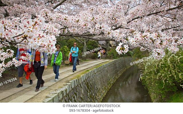 People walking along the Path of Philosophy Tetsugaku no Michi under the cherry blossoms