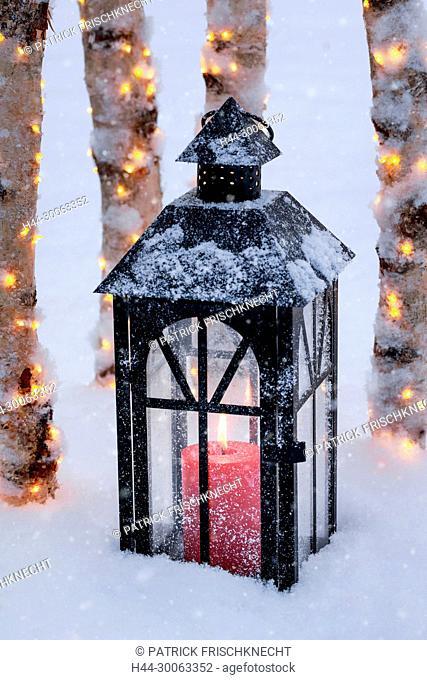 Laterne mit beleuchteten Birkenstämme im Freien