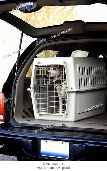 Dalmatian being transported in pet carrier