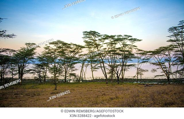Trees interrupt the landscape at dusk in Lake Nakuru National Park, Kenya
