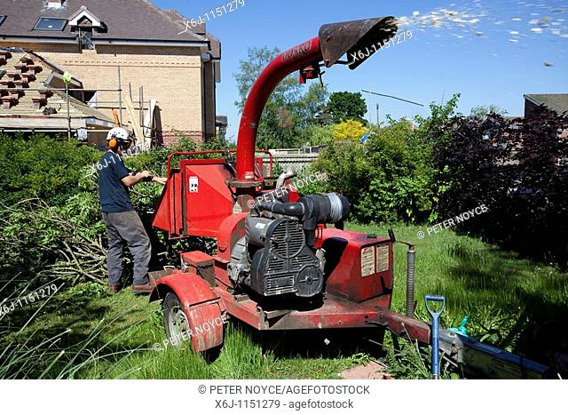 tree surgeon using wood chipper on branches of cut down tree