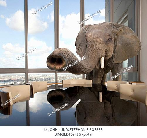 Elephant standing in conference room in office