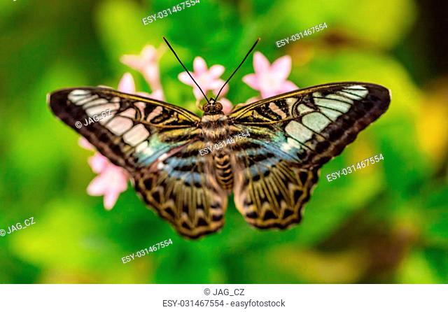 Closeup macro photo of butterfly on flower blossom, low depth of focus