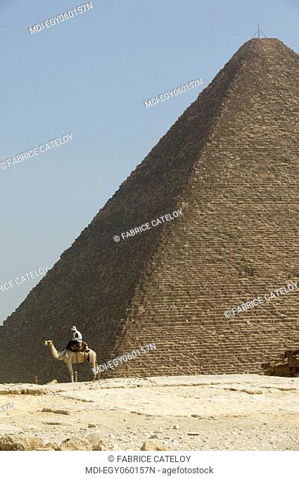 Guide on his dromedary waiting for tourists at foot of the Cheops pyramid